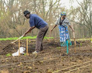 Burundi farmers smaller