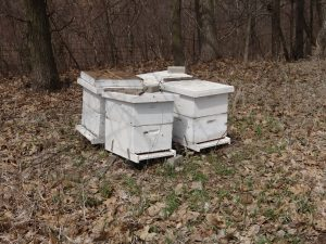 hives reduced