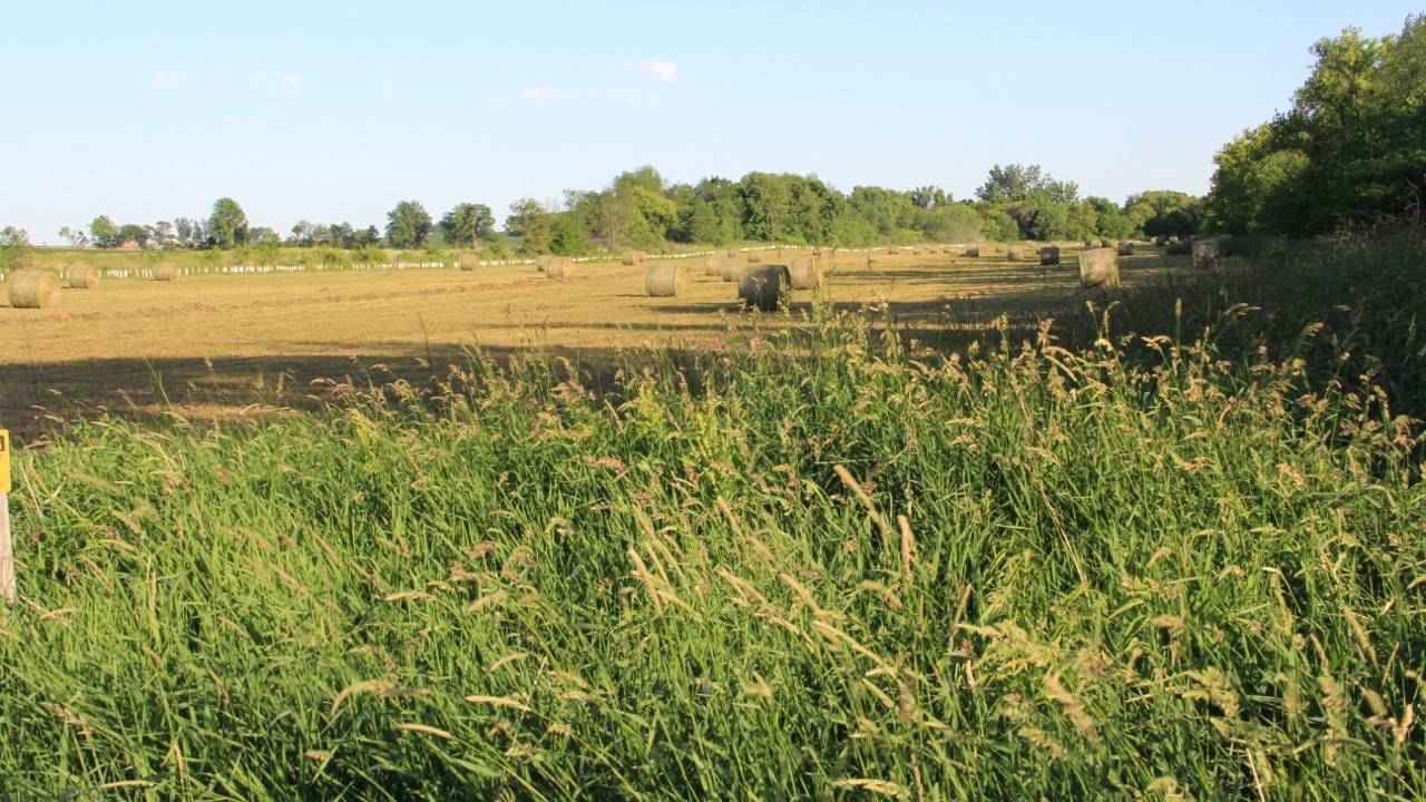Image of field and hay