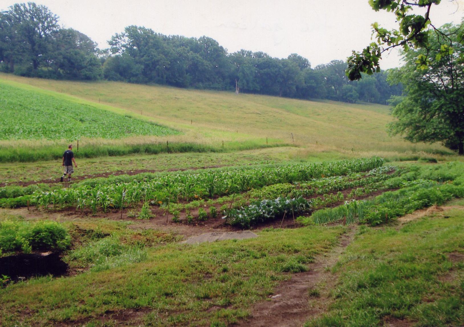 Driscoll garden