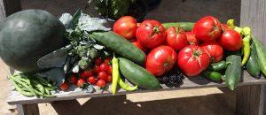 fresh vegies