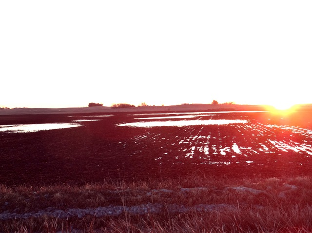 drowning field and sunset