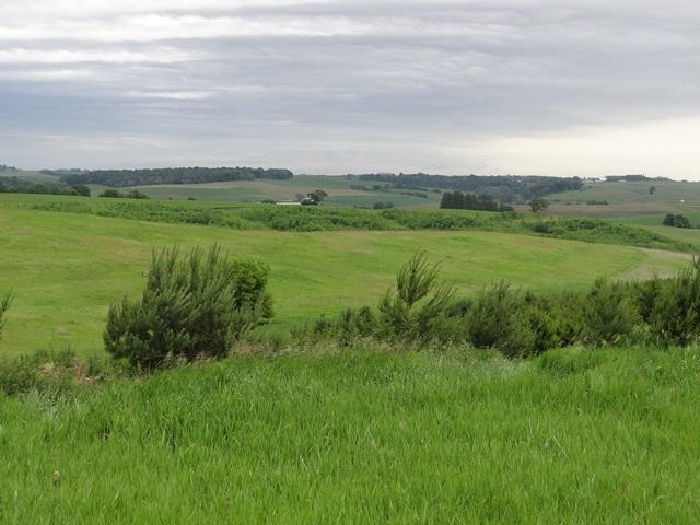 Farm's Field