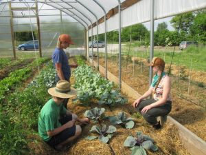 Three young farmers in hoop house